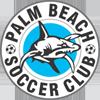 棕榈滩鲨鱼